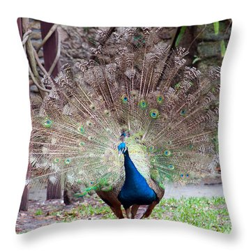 Peacock Display Throw Pillow by Kenneth Albin