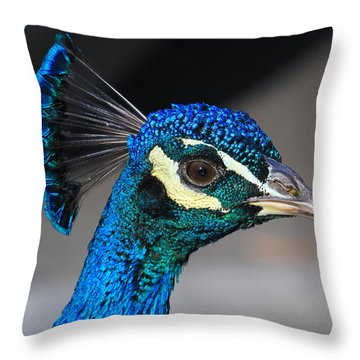 Peacock Throw Pillow by Paul Marto