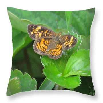 Pearl Crescent Butterfly Throw Pillow by Randi Shenkman