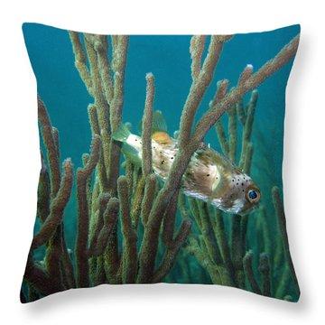 Peek-a-puffer Throw Pillow by Kimberly Mohlenhoff