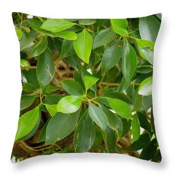 Peek Throw Pillow by FeVa  Fotos
