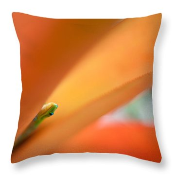 Peek Throw Pillow by Mike Reid