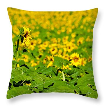 Throw Pillow featuring the photograph Peeking Above  Sea Of Yellow by Colleen Coccia