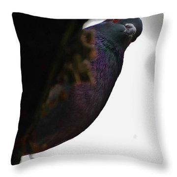 Peeking Pigeon Throw Pillow by DigiArt Diaries by Vicky B Fuller