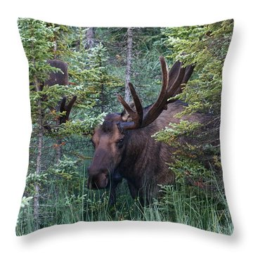 Throw Pillow featuring the photograph Peeking Through The Spruce by Doug Lloyd