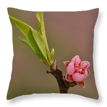 Petite Peach Throw Pillow
