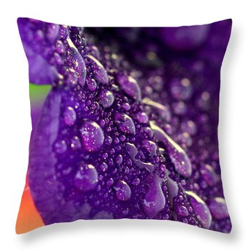Throw Pillow featuring the photograph Petunia Raindrops by Suzanne Stout