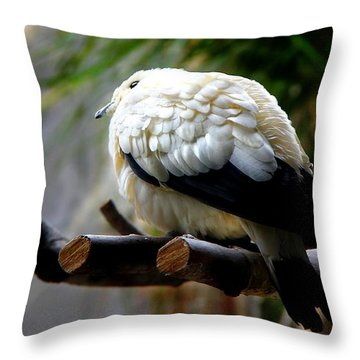 Throw Pillow featuring the photograph Pied Imperial Pigeon by Davandra Cribbie