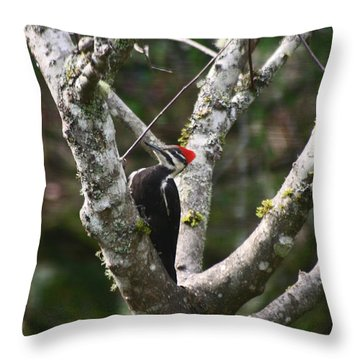 Throw Pillow featuring the photograph Pileated Woodpecker In Cherry Tree by Kym Backland