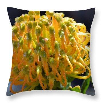 Throw Pillow featuring the photograph Pincushion Blossom by Werner Lehmann