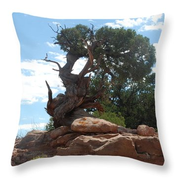 Pine Tree By The Canyon Throw Pillow by Dany Lison
