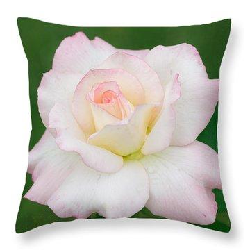 Pink Edge White Rose Throw Pillow by Atiketta Sangasaeng