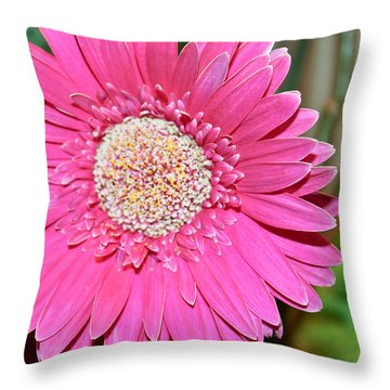 Pink Gerbera Daisy Throw Pillow by Ann Murphy