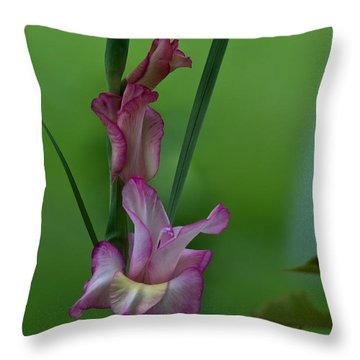 Throw Pillow featuring the photograph Pink Gladiolus by Ed Gleichman