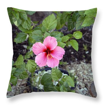 Pink Hibiscus And Wheel Throw Pillow