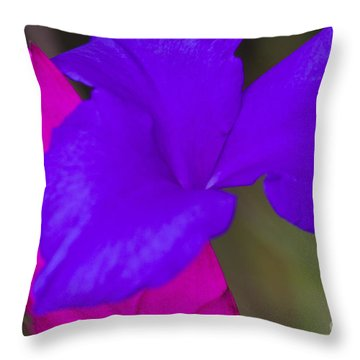 Pink Quill Throw Pillow by Heiko Koehrer-Wagner