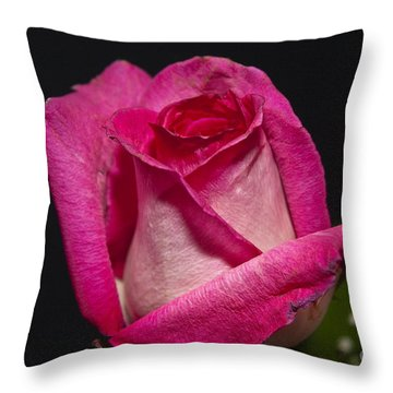Throw Pillow featuring the photograph Pink Rose by Michael Waters