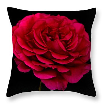 Throw Pillow featuring the photograph Pink Rose by Steve Purnell