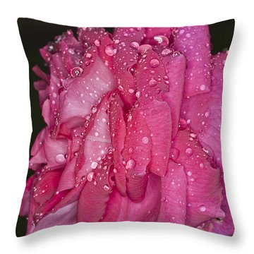 Throw Pillow featuring the photograph Pink Rose Wendy Cussons by Steve Purnell