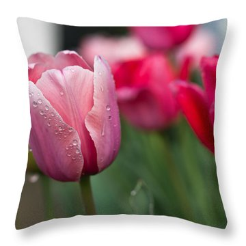 Pink Tulips With Water Drops Throw Pillow