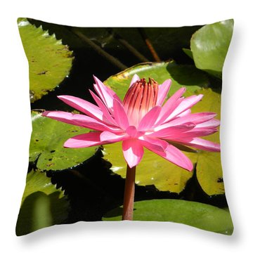 Pink Water Lilly With Frog Throw Pillow by Jodi Terracina