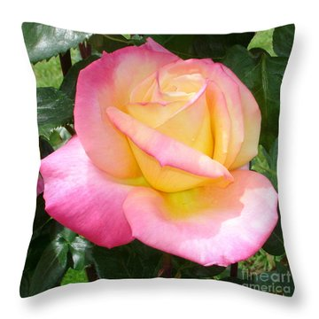 Throw Pillow featuring the photograph Pink Yellow Beauty by Tanya  Searcy