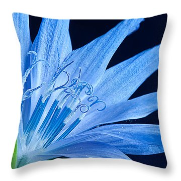 Throw Pillow featuring the photograph Pistil's Of Chicory by Randall Branham