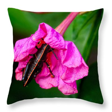 Pit Stop Throw Pillow by Christopher Holmes