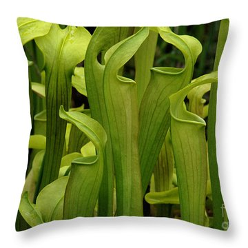 Pitcher Plants Throw Pillow by Bob Christopher
