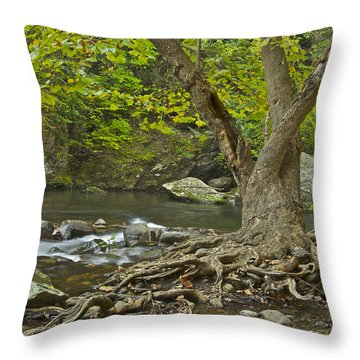 Planted By The Rivers Of Water Throw Pillow by Michael Peychich
