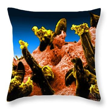 Plasmodium Gallinaceum, Sem Throw Pillow by Science Source
