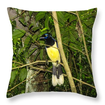 Throw Pillow featuring the photograph Plush-crested Jay by David Gleeson