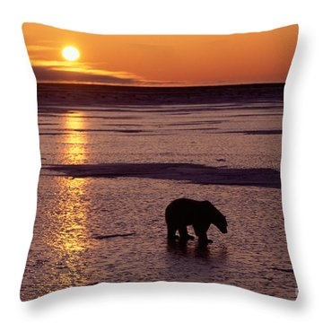 Polar Bear At Sunset Throw Pillow by Francois Gohier and Photo Researchers