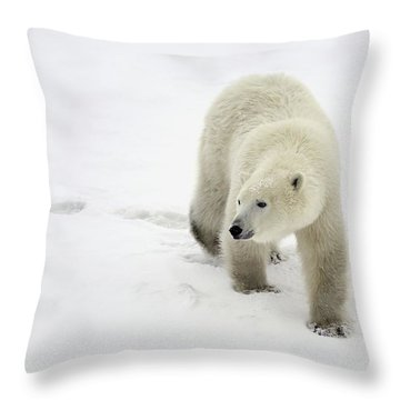 Polar Bear Walking Throw Pillow by Richard Wear