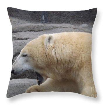 Polar Bear Yawn Throw Pillow by Sara  Raber