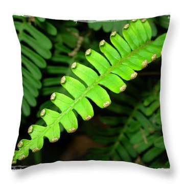 Polypody Throw Pillow by Judi Bagwell