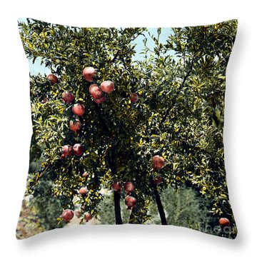 Pomegranate Tree Throw Pillow by Granger