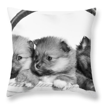 Pomeranian Throw Pillow by Everet Regal