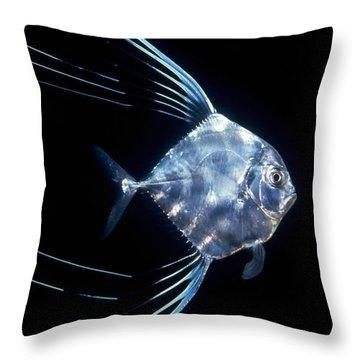 Pompano Juvenile Off  Manualita Island Throw Pillow by Flip Nicklin