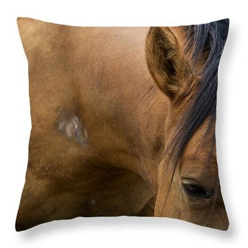 Throw Pillow featuring the photograph Curious Pony by Lorraine Devon Wilke