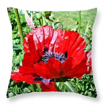 Throw Pillow featuring the photograph Poppy by Nick Kloepping
