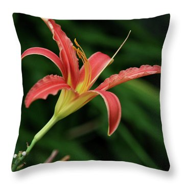 Throw Pillow featuring the photograph Popsicle Bloom by Lorraine Devon Wilke
