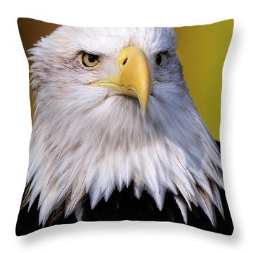 Portrait Of A Bald Eagle Throw Pillow