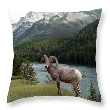 Portrait Of A Bighorn Sheep At Lake Minnewanka  Throw Pillow