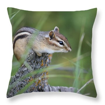 Throw Pillow featuring the photograph Portrait Of A Chipmunk by Penny Meyers
