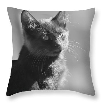 Portrait Of A Kitty Throw Pillow by Kim Henderson