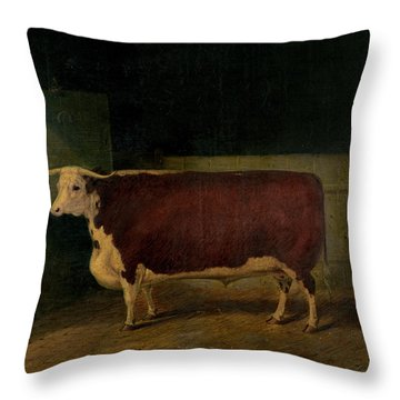 Portrait Of A Prize Hereford Steer Throw Pillow by Richard Whitford