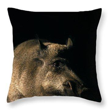 Portrait Of A Wild Boar Throw Pillow by Ulrich Kunst And Bettina Scheidulin