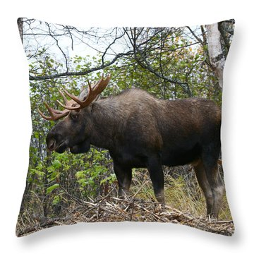 Throw Pillow featuring the photograph Poser by Doug Lloyd