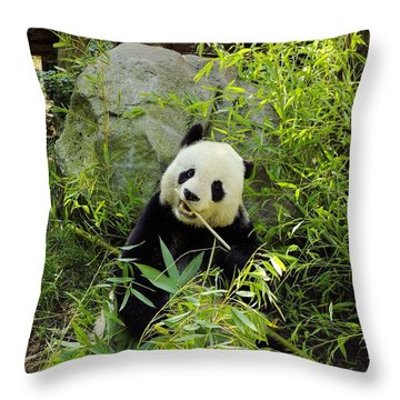 Posing Panda Throw Pillow by John  Greaves